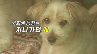 [영상구성] 국회에 등장한 '지나가던 개'