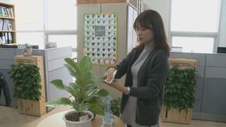"""미세먼지 잡는 식물들…""""실내에 두면 효과"""""""