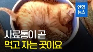 [영상] '행복이란 게 이런 건가요'…사료통 아기 고양이 화제