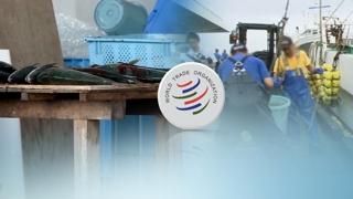 전례 없는 역전승…WTO '잠재적 위험성'에 무게