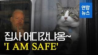 [영상] 어산지 주인님은 떠났어도 '대사관 고양이'는 무사