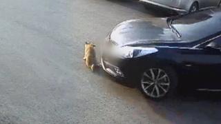 떠돌이 개 차로 쳐…동물자유연대, 경찰에 고발