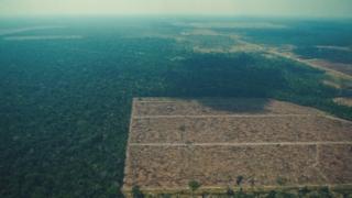 아마존 열대우림 보름 만에 축구장 7천개 면적 사라져