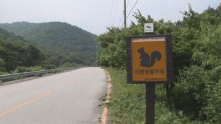 """""""길이 있네""""…생태통로 찾는 야생동물들"""