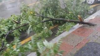 태풍급 폭풍우 남부지역 강타…피해 속출