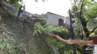 진주성 600년 된 느티나무 갑자기 쓰러져