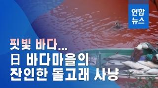 [이슈 컷] 핏빛 바다…일본 바다마을의 잔인한 돌고래 사냥
