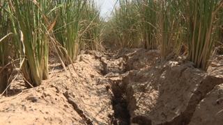 '마른 장마' 언제까지…커지는 가뭄 걱정