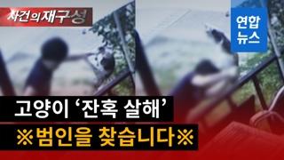 [영상] 수차례 '패대기'…고양이 잔혹 살해 모습에 '공분'