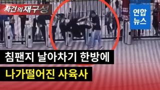 [영상] 사육사의 굴욕…침팬지 '날아차기' 한방에 벌러덩