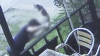경의선 책거리 고양이 학대범 5일 만에 검거