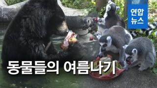 [영상] 동물원 동물들은 무더위를 어떻게 견딜까