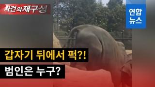 [영상] 새끼 코끼리 꼬꾸라지면서 물웅덩이 '풍덩'…누가 밀었나?