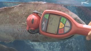 방사능 검출이력 日식품 안전검사 두 배로…17개 대상