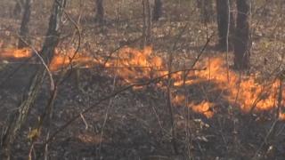 볼리비아도 산불로 몸살…서울면적 10배 피해