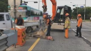 '농장 탈출' 사슴 시내버스와 충돌…무사히 구조