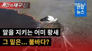 [영상] 둥지 아래 들불 번지는데…꿋꿋이 알 지켜낸 어미 황새