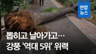 [영상] 날아가고 떨어지고 쓰러지고…초강력 태풍 '링링' 피해 속출
