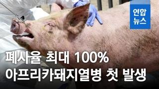 [영상] '폐사율 최대 100%' 아프리카돼지열병 첫 발생…북한서 유입?