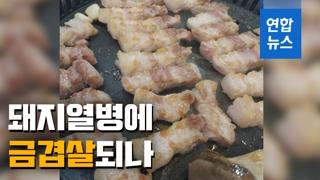 [영상] 돼지열병에 금겹살되나…돼지고기 경매가 33% 급등