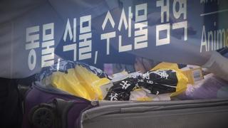 """'돼지열병 막아라"""" 인천공항 24시간 검역"""