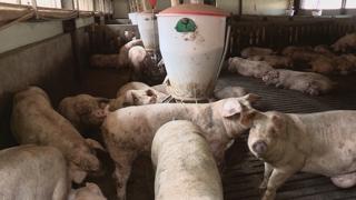 돼지열병 대응 범정부대책본부 가동…특교세 17억원