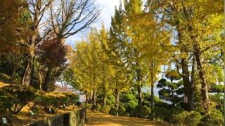 """[주요신문 브리핑] """"가을 낭만 느껴지는 단풍 낙엽길로 오세요"""" 外"""