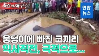 [영상] 물웅덩이에 빠져 허우적대던 새끼코끼리…익사 직전 구조