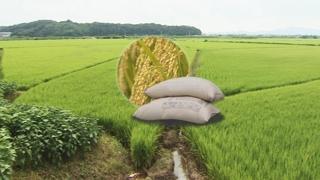 """수입쌀 관세율은 지켰는데…""""밥쌀 일부 수입 불가피"""""""