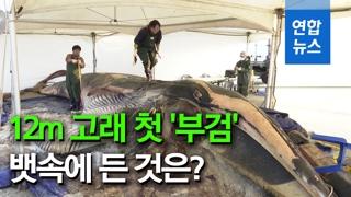 [영상] 10m 이상 대형 참고래 국내 첫 '부검'