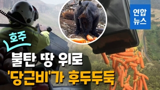 [영상] 호주 불탄 땅위로 야생동물 먹이 2톤 '공중 투하'