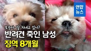 [영상] 반려견 '토순이' 잔혹하게 살해한 20대 남성 실형