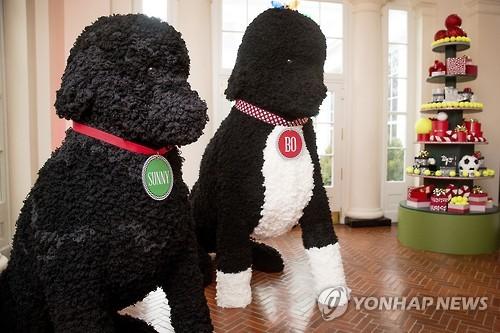 오바마 가족 애완견 서니와 보의 모형