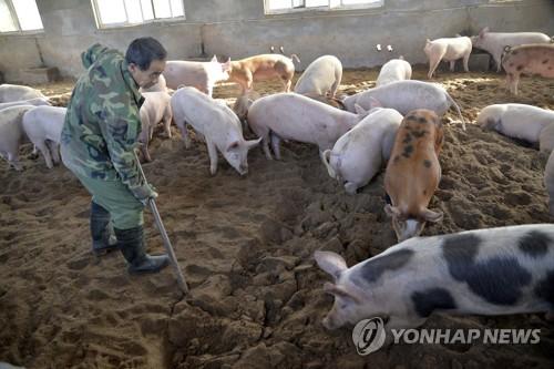 번지는 아프리카 돼지열병…중국 사료서 바이러스 첫 검출