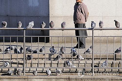 태국서 함부로 비둘기에 모이 줬다가는 철창신세?