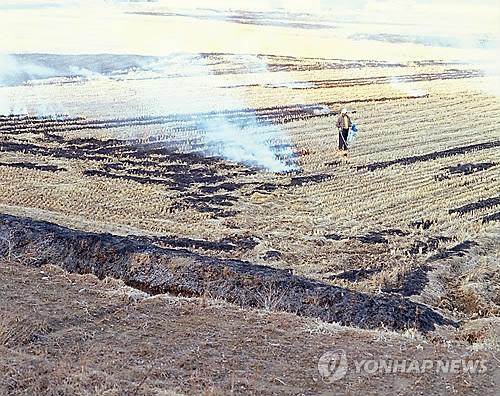 논 태우기 [연합뉴스 자료사진]