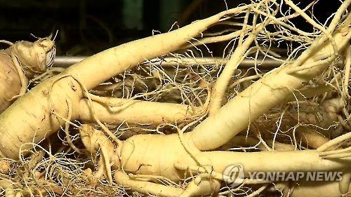 인삼  [연합뉴스TV 제공]