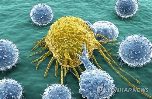 암세포와 림프구