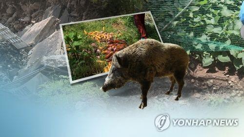 멧돼지의 습격(CG)