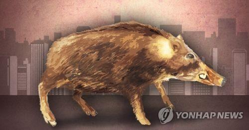 부산 도심에 멧돼지 출현 신고…기동포획단 수색중