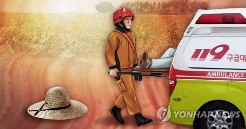 폭염 속 밭 일하던 노인 사망 (PG)