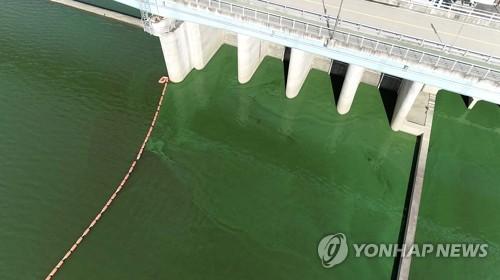'녹조 시즌' 시작…낙동강 창녕함안 올해 전국 첫 조류경보