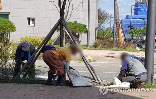 일하는 노인들