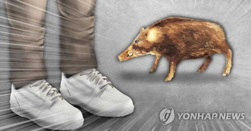 조선소 작업장에까지 나타난 멧돼지…피해방지단이 사살
