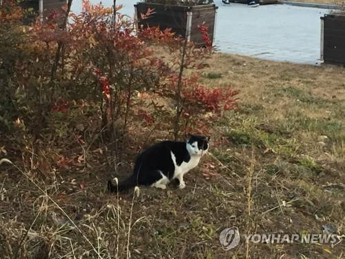 인천 동물보호센터, 길냥이 이송중 분실…법적 분쟁 휘말려