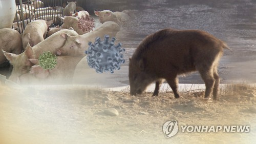 연천 멧돼지서 또 돼지열병 바이러스…민통선 남쪽서는 처음(종합2보)