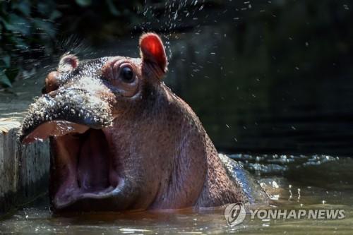 하마 [AFP=연합뉴스 자료사진]