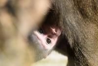 눈 떠보니 아빠가 대장…드릴개코원숭이가 태어났어요!