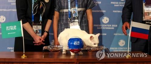 개막전 러시아 승리를 예상한 점쟁이 고양이 아킬레스