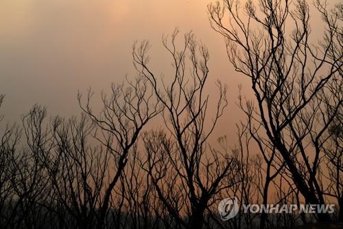 단비에 주춤했던 호주 산불, 폭염에 또 위험 고조